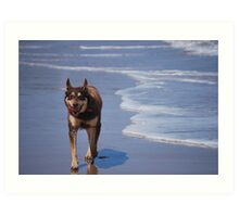 Smiling Dog - Skenes Creek Art Print