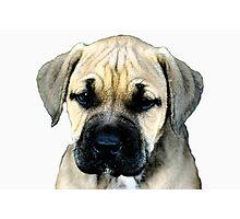 pup Photographic Print
