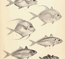 The fishes of India by Francis Day 049 - Armatus Caranx oblongus Fasciata Gallus Leptolepis_ by wetdryvac