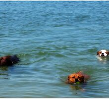 Dog Paddle by dozzam