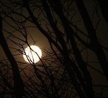 Full Moon Rising by Nichole Mallyon