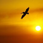 Silhouette of a Pelican 01 by hemesphere