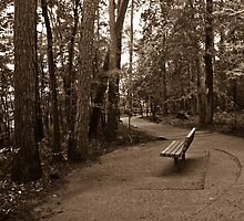 A Path in the Woods B&W The Woodlands TX USA by GJKImages