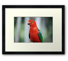 (Alisterus scapulari) The King Framed Print