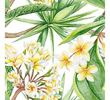 Watercolor Tropical Plants Photographic Print