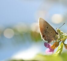 Morning butterfly by stephaniemanuel