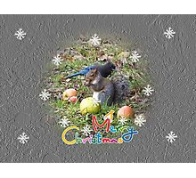 Squirrel And Steller Jay Merry Christmas Card Photographic Print