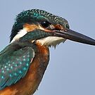 The Common Kingfisher by Tony Wong