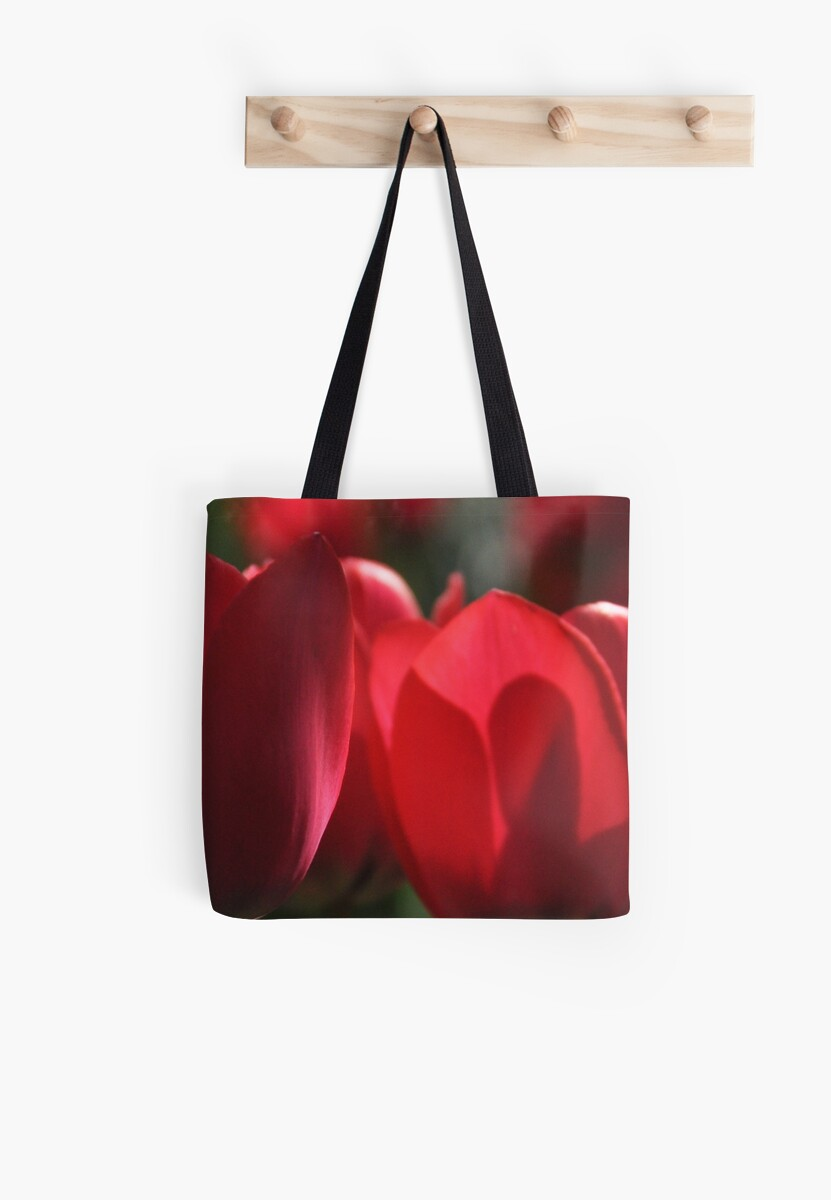 Tulip Shadow Play  by Heather Thorsen