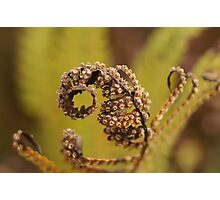 vegetal octopus Photographic Print