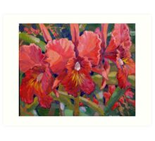 Cattleya, Waianae Sunset Art Print