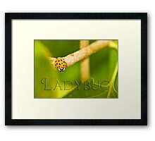 Lady in Gold Framed Print
