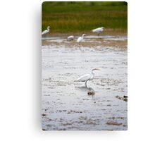 White Crane in Wetlands Canvas Print