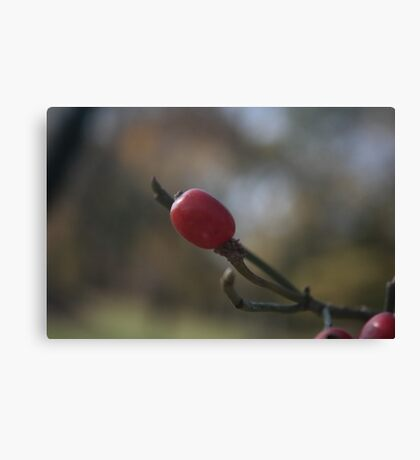 The Little Red Ball Canvas Print