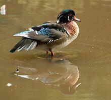Ducky by Martina Fagan
