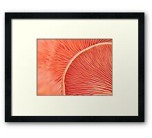 Marvelling the Mushroom Framed Print