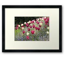 Tulips and Tulips Framed Print