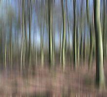 Ghost Woods by CaptKremmen