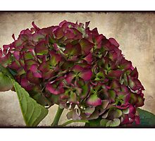 Hortensia Jewel - Card version by Leslie Nicole