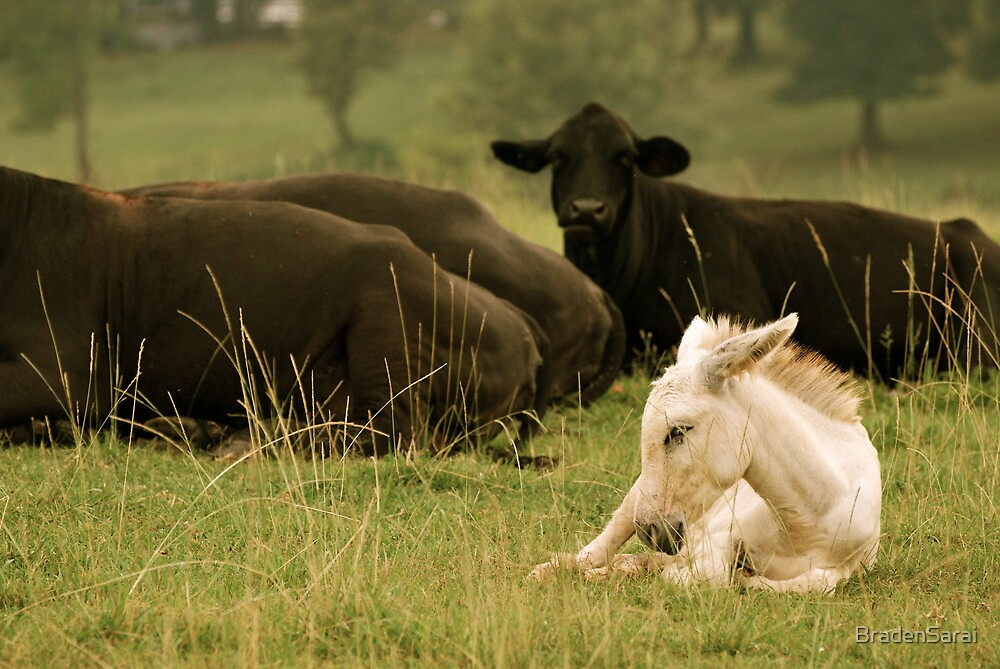 Foal and Cows by BradenSarai