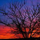 Winter sunrise by DanTheBugleMan