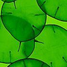 Green Honesty by elisabeth tainsh