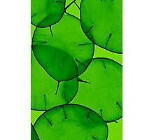 Green Honesty Photographic Print