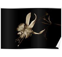 Fuchsia in Sepia tone Poster