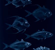 The fishes of India by Francis Day 049 - Inverted - Armatus Caranx oblongus Fasciata Gallus Leptolepis_ by wetdryvac