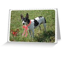 Christmas Card, Rat Terrier Greeting Card