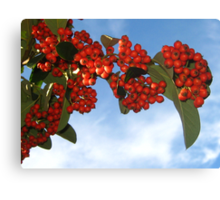 Colorful Berries for Christmas Canvas Print