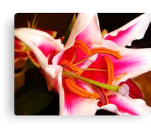 Painted Pistil Canvas Print