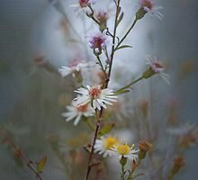 Little Wild Flowers by Bonnie T.  Barry