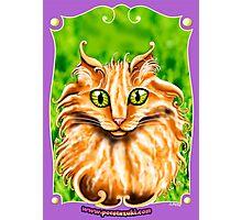 Orange Cat Photographic Print