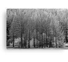 Trees, Anderson Valley, California Canvas Print