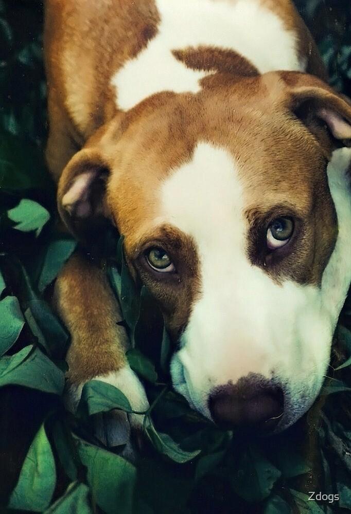 Sad Eyes by Zdogs