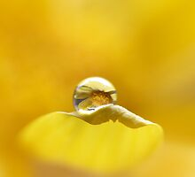 A little drop of sunshine by Rhana Griffin