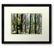 regrowth after fires Framed Print