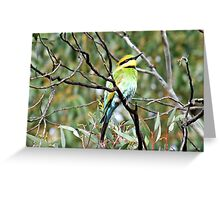 rainbow Bee-Eater Greeting Card