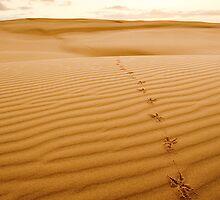 Footprints at Anna Bay by Jack Reynolds
