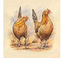 Frecsian Fowl Photographic Print