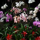 Elegant Meeting of Orchids by Nira Dabush