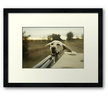 Its a candy shop for dogs Framed Print