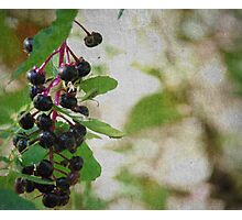 Scratched Berries Photographic Print