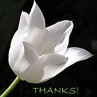 White Tulip Thank You Card by Betty Mackey