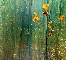 Autumn Sparkle by jeffrey freeman
