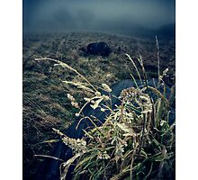 Cold day brings no light - Homer, nr Much Wenlock by rharris-images