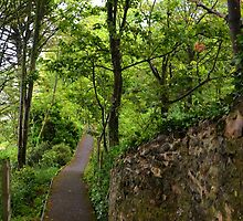 Down a leafy lane in Lyme..........Dorset UK by lynn carter