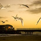 Seagulls at Dusk by Andrew Lever