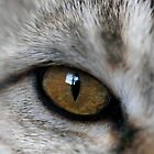 Eye of the Tabby by janetlee